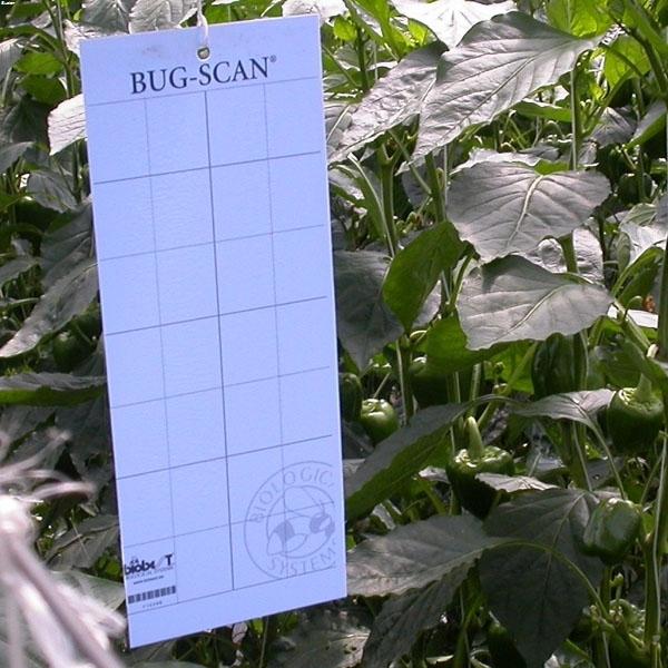 Bug-Scan Blue Thrips/Leaf Miner Traps (pack of 10) | Bustan