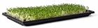 Microgreen Growing 10 x 20 Tray - No Hole