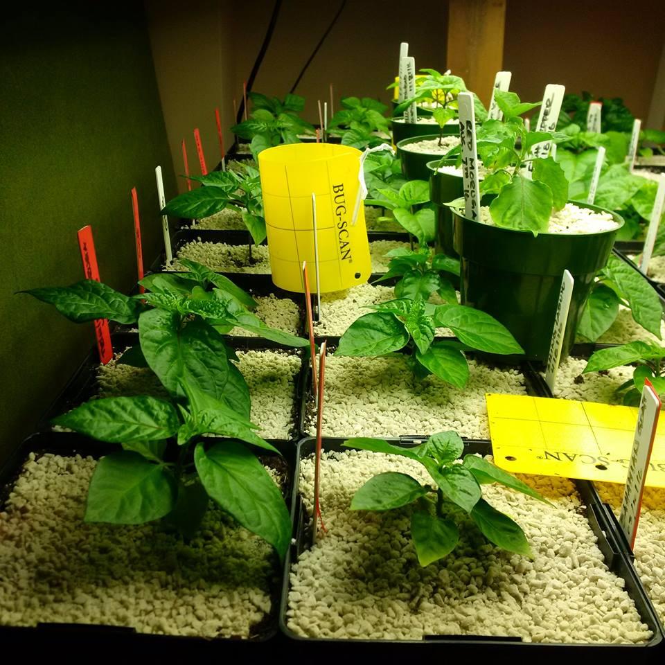 Bustan toronto canada hydroponics and indoor grow lights for Indoor gardening nutrients
